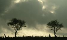 tn_trees10.09.09