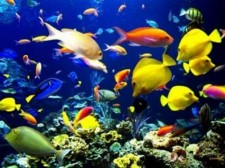 tn_COLORFUL REEF FISH_medium